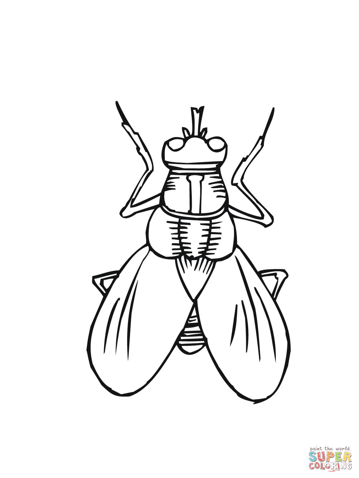 Fly coloring #11, Download drawings