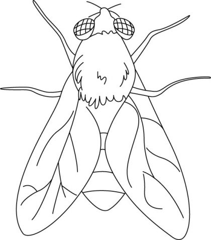 Fly coloring #14, Download drawings