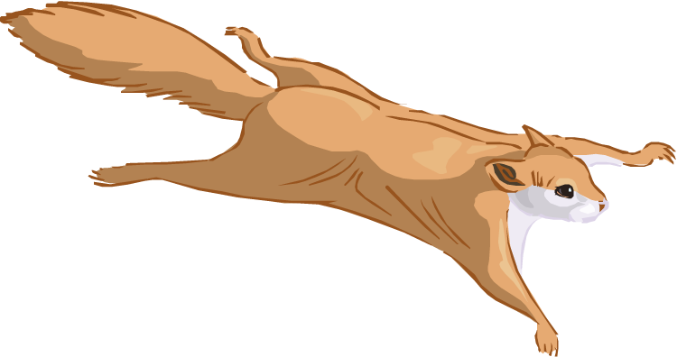 Flying Squirrel clipart #10, Download drawings
