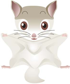 Flying Squirrel clipart #17, Download drawings