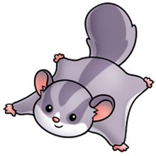 Flying Squirrel clipart #6, Download drawings