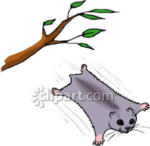 Flying Squirrel clipart #18, Download drawings