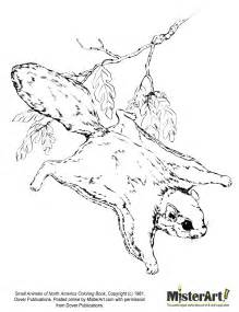 Flying Squirrel coloring #19, Download drawings