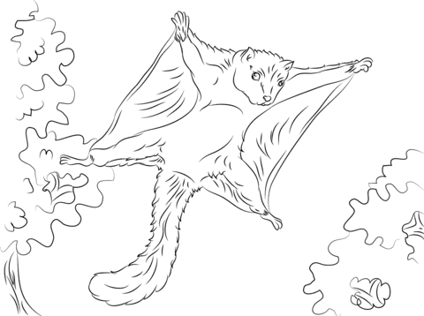 Flying Squirrel coloring #8, Download drawings