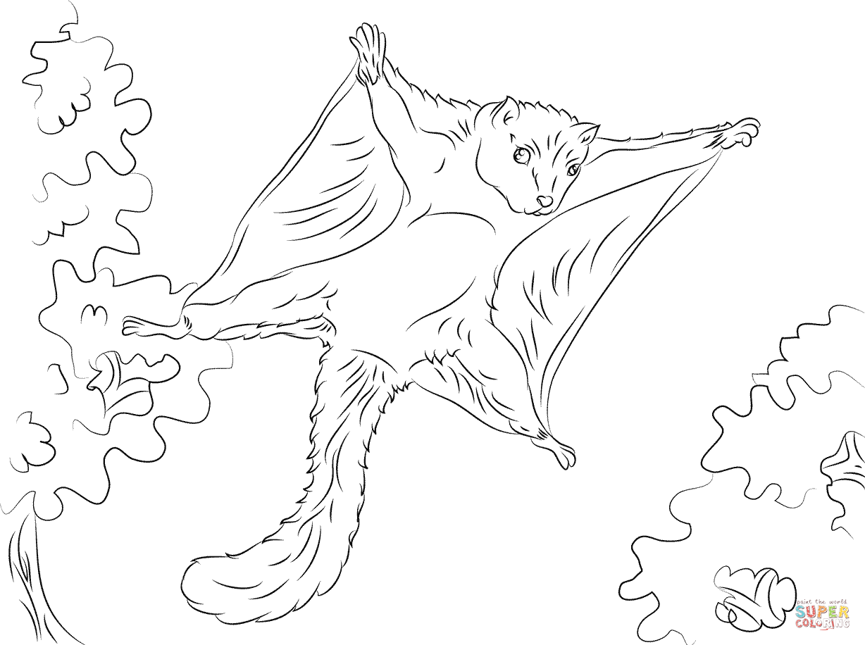 Flying Squirrel coloring #18, Download drawings