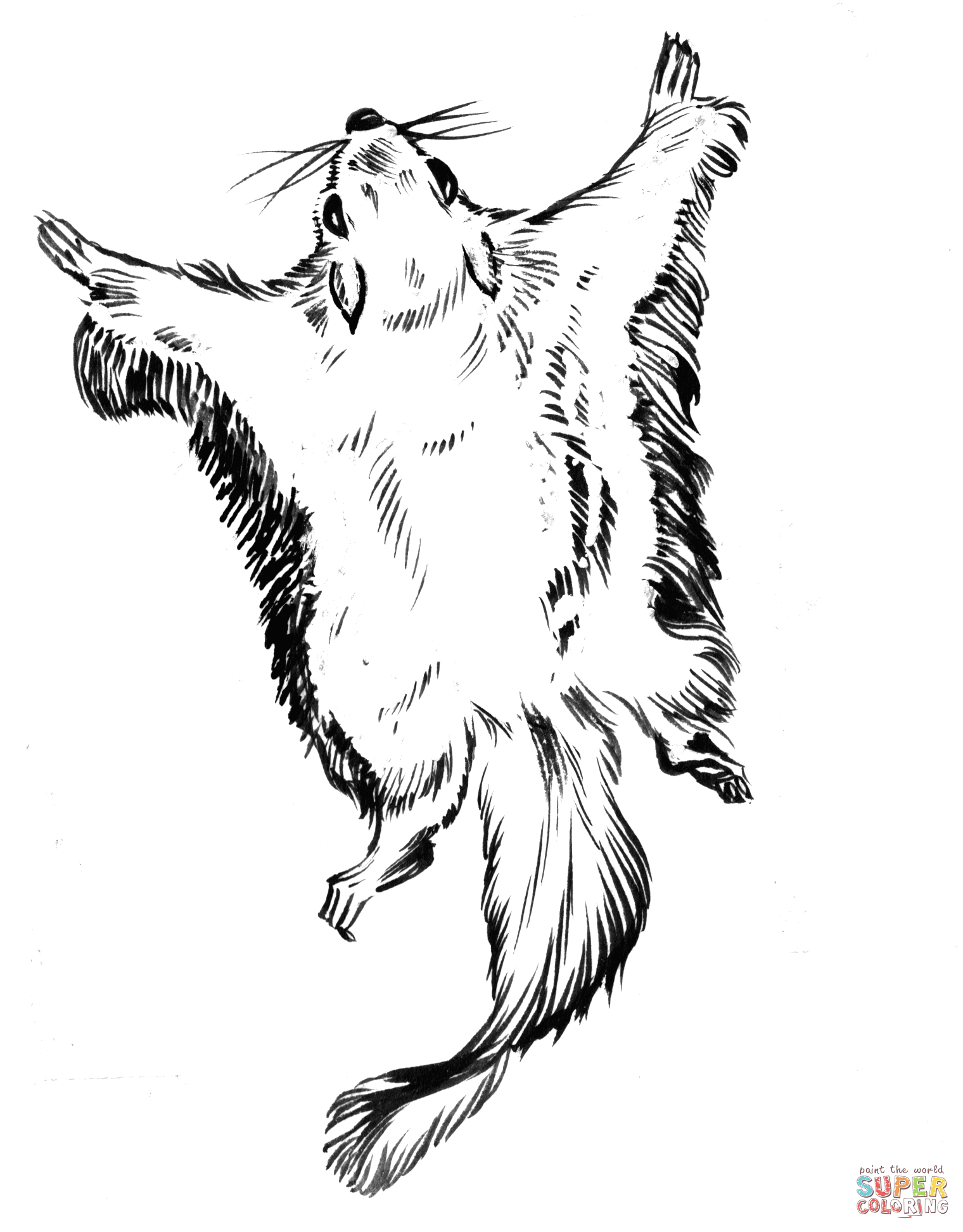 Flying Squirrel coloring #2, Download drawings