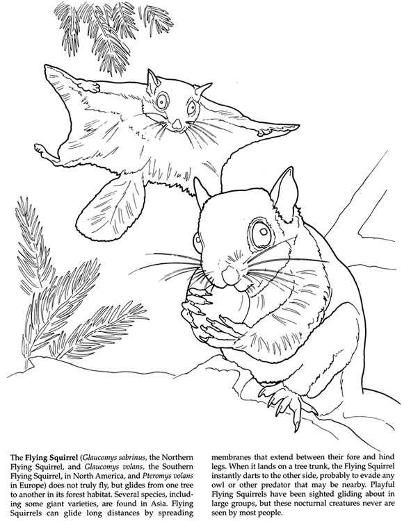 Flying Squirrel coloring #3, Download drawings