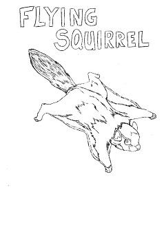 Flying Squirrel coloring #6, Download drawings
