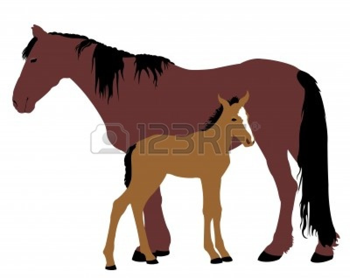 Foal clipart #4, Download drawings