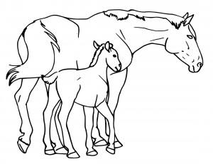 Foal clipart #3, Download drawings