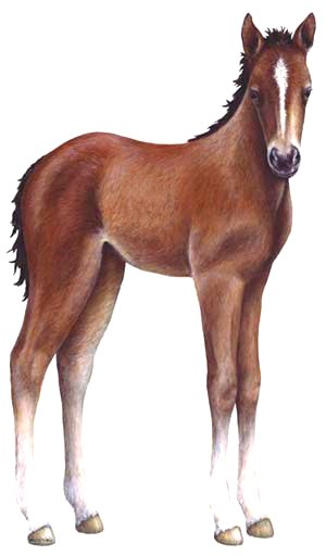 Foal clipart #2, Download drawings
