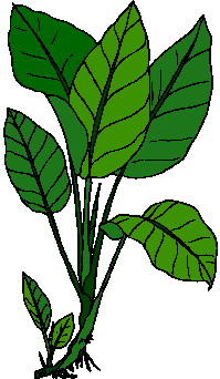 Foliage clipart #17, Download drawings