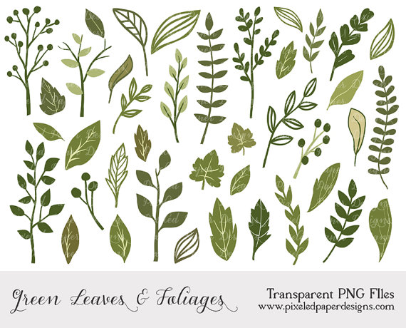 Foliage clipart #14, Download drawings