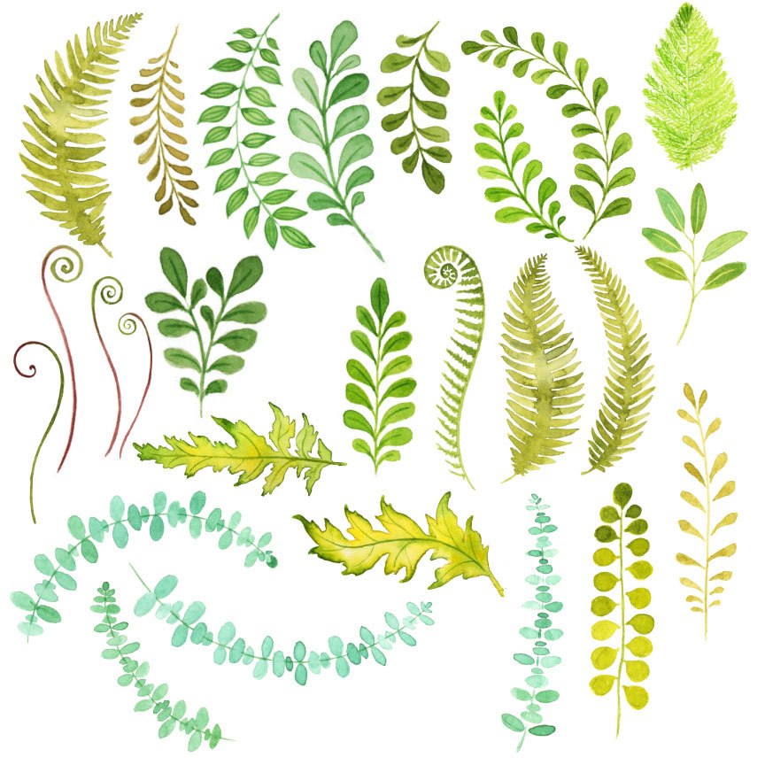 Foliage clipart #18, Download drawings