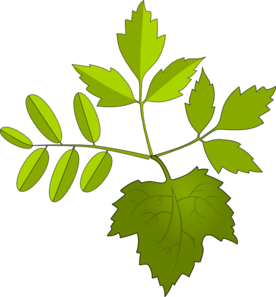 Foliage clipart #5, Download drawings