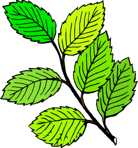 Foliage clipart #4, Download drawings