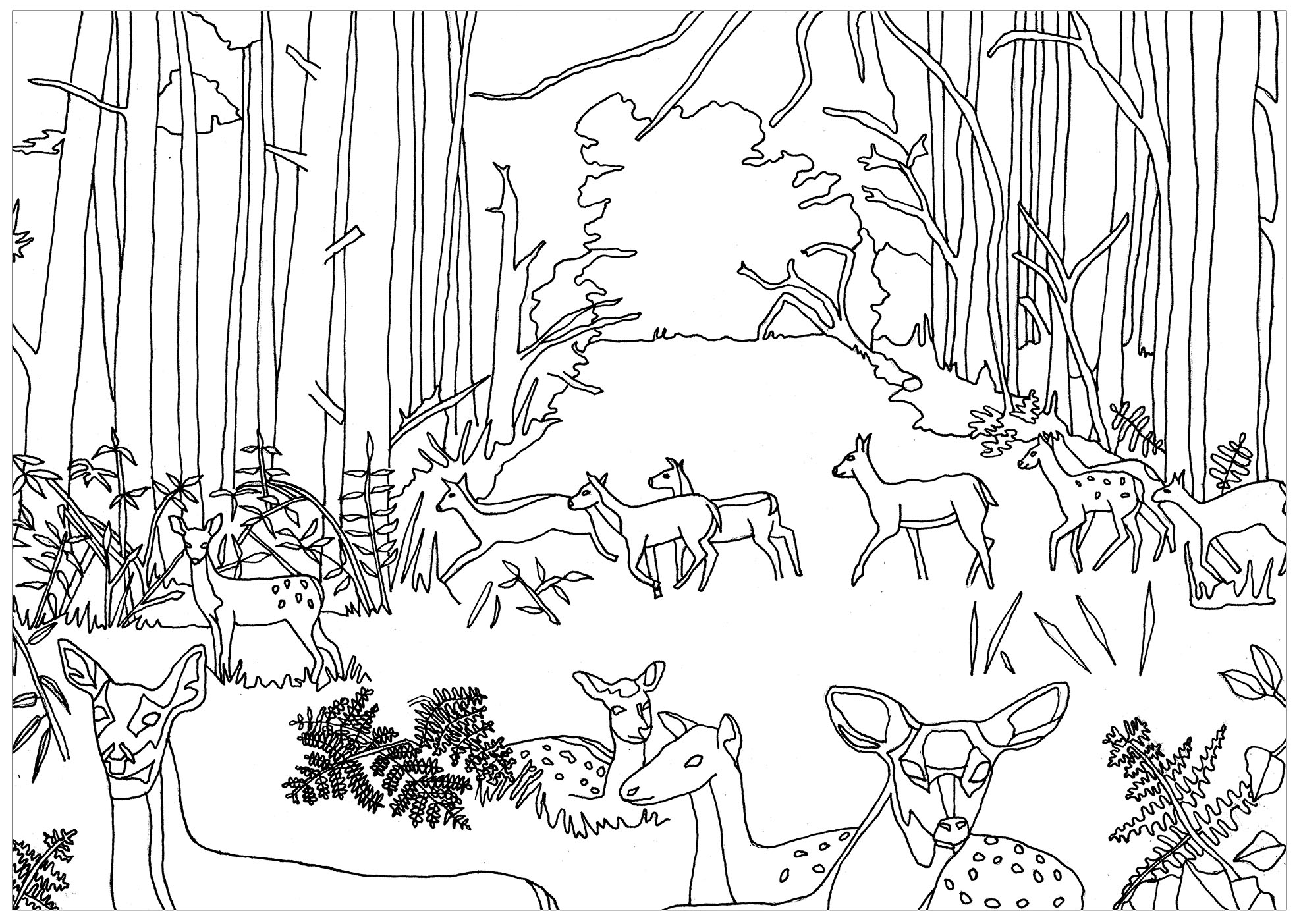 Forest coloring #3, Download drawings