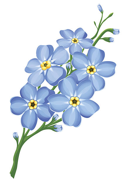 Forget-Me-Not clipart #10, Download drawings