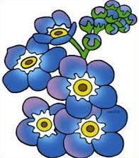 Forget-Me-Not clipart #11, Download drawings