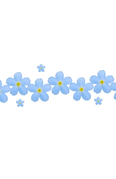 Forget-Me-Not clipart #5, Download drawings