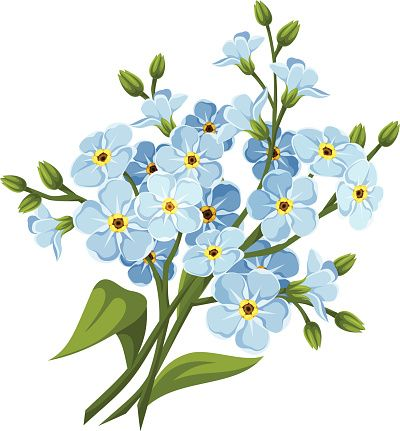 Forget-Me-Not clipart #14, Download drawings