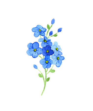 Forget-Me-Not clipart #13, Download drawings