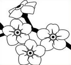 Forget-Me-Not clipart #15, Download drawings
