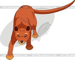 Fossa clipart #19, Download drawings