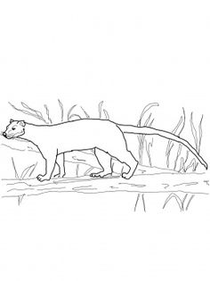 Fossa clipart #16, Download drawings