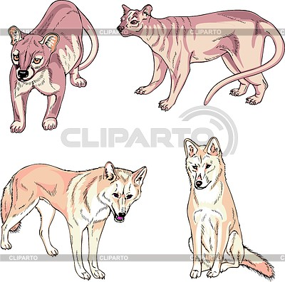 Fossa clipart #20, Download drawings