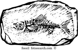Fossil clipart #11, Download drawings