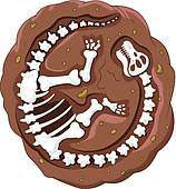 Fossil clipart #20, Download drawings