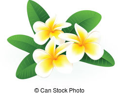Frangipani clipart #19, Download drawings
