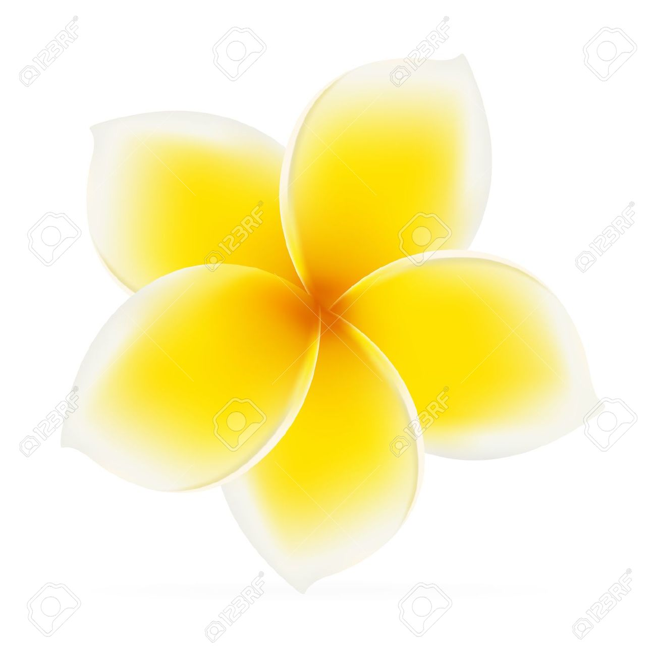 Frangipani clipart #2, Download drawings