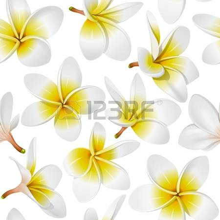 Frangipani clipart #4, Download drawings