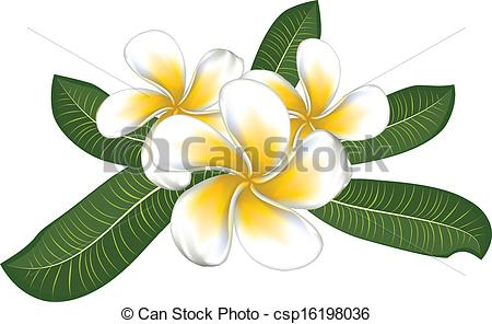 Frangipani clipart #5, Download drawings