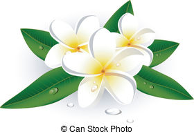 Frangipani clipart #20, Download drawings