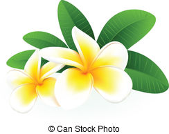 Frangipani clipart #17, Download drawings