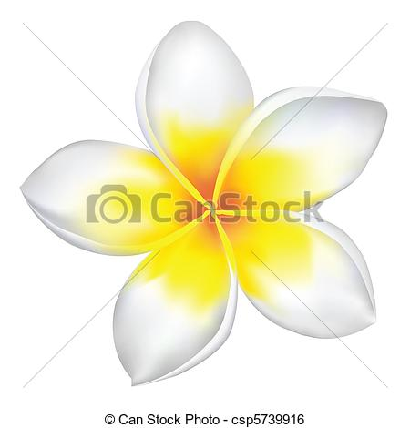 Frangipani clipart #15, Download drawings