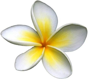 Frangipani clipart #11, Download drawings