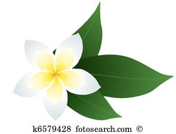 Frangipani clipart #14, Download drawings