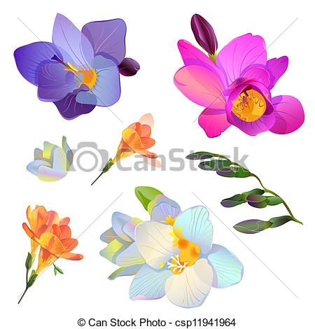 Freesia clipart #8, Download drawings