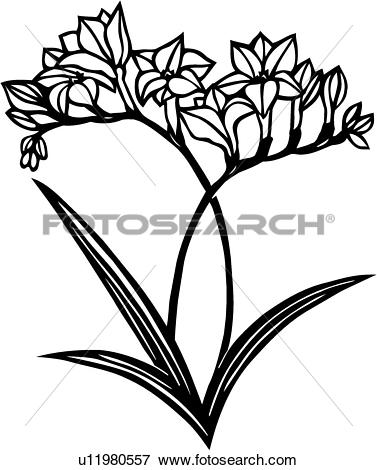 Freesia clipart #7, Download drawings