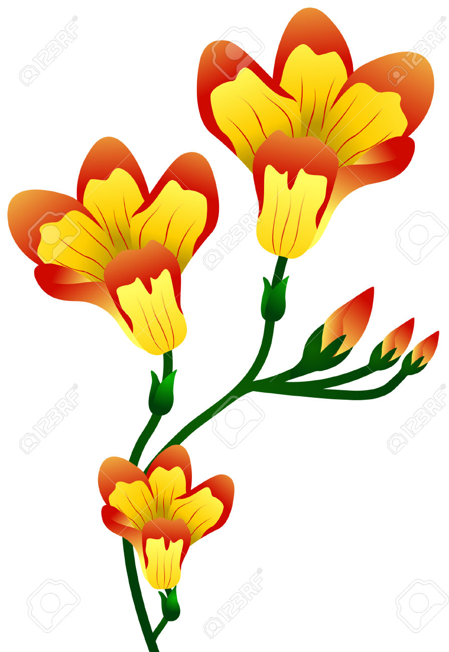 Freesia clipart #4, Download drawings