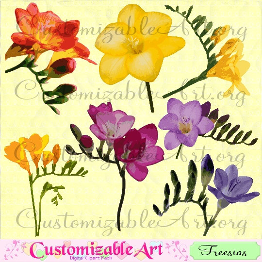 Freesia clipart #3, Download drawings