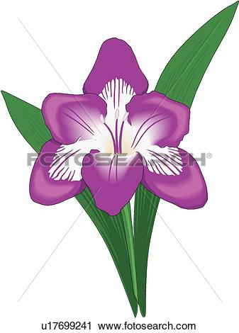 Freesia clipart #11, Download drawings