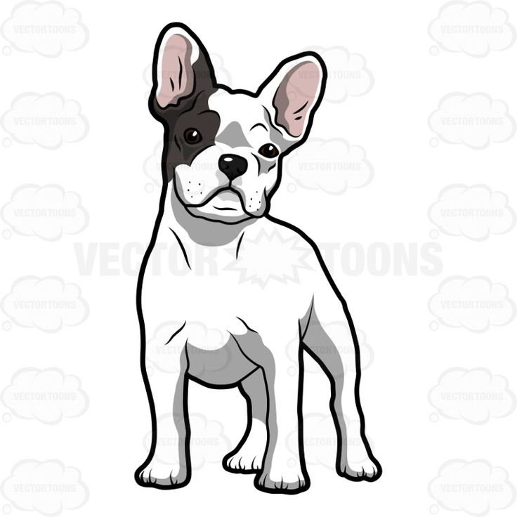 French Bulldog clipart #15, Download drawings