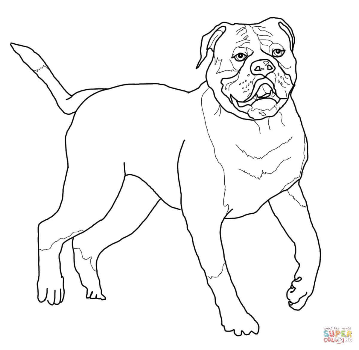 French Bulldog coloring #20, Download drawings