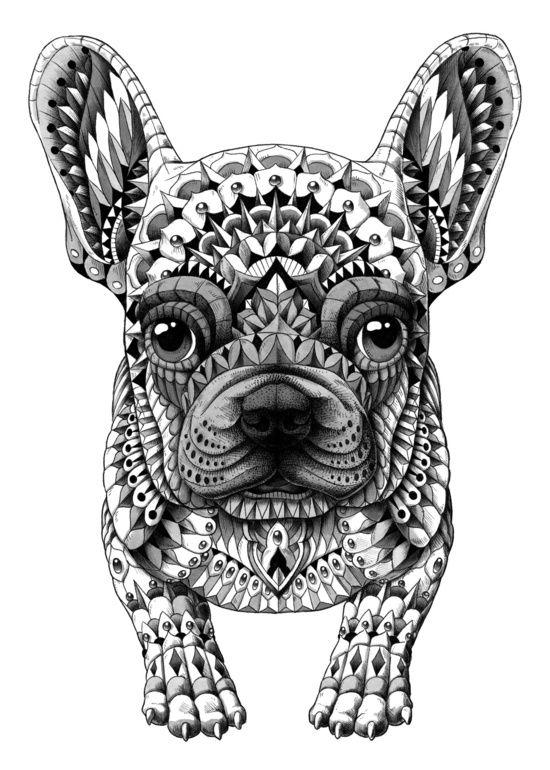 French Bulldog coloring #17, Download drawings