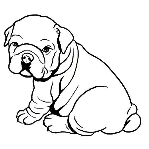 French Bulldog coloring #4, Download drawings